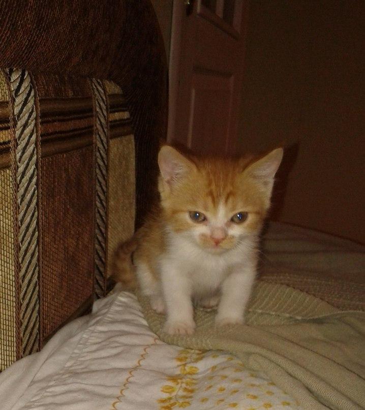 котенок Фрося