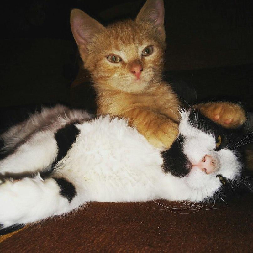 котенок Рудик