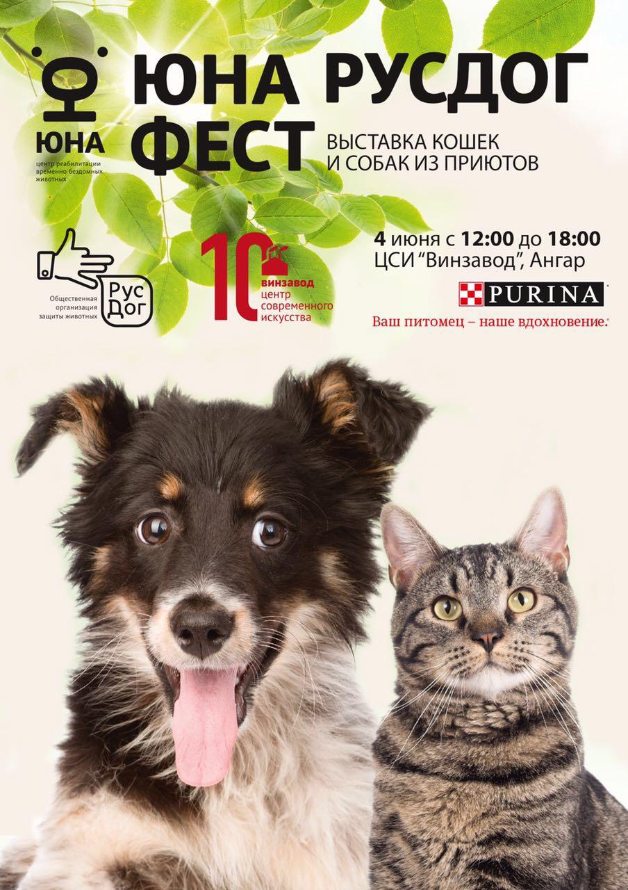 выставка кошек и собак юна дог фест